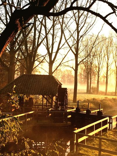 Winter Morning Winter Sunrise Old Watermill  Water Beautiful Nature Trees Eye Em Nature Lover Netherlands Creative Light And Shadow