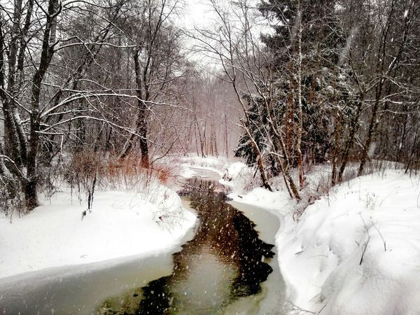 пока, зима! зима природароссии Forest River EyeEm Nature Lover Hello World Liza_berg Shades Of Winter