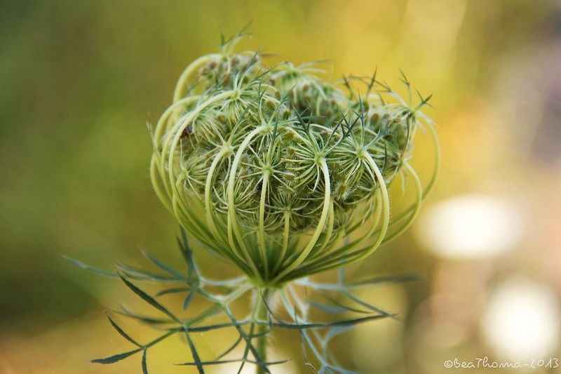 :: achillea, flower serie :: Flowers Enjoying Life I Wish You Were Here