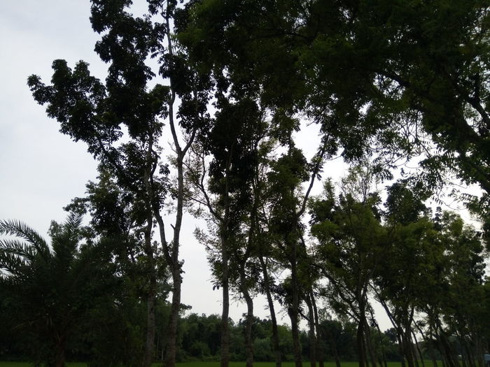 Tree Low Angle View Outdoors Nature Growth Sky Day No People Branch Forest Beauty In Nature Tree Area Sitting Occupation Two People Headwear Good City Rice Paddy First Eyeem Photo Close-up Rural Scene Healthy Eating Beauty In Nature Green Color