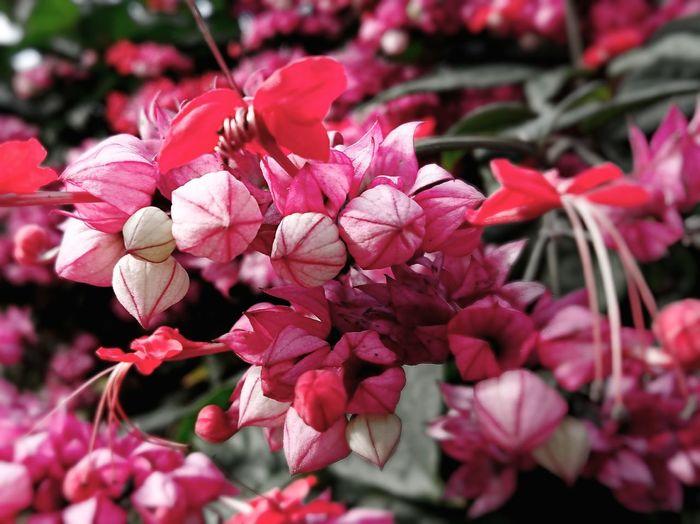 Reddish Flower