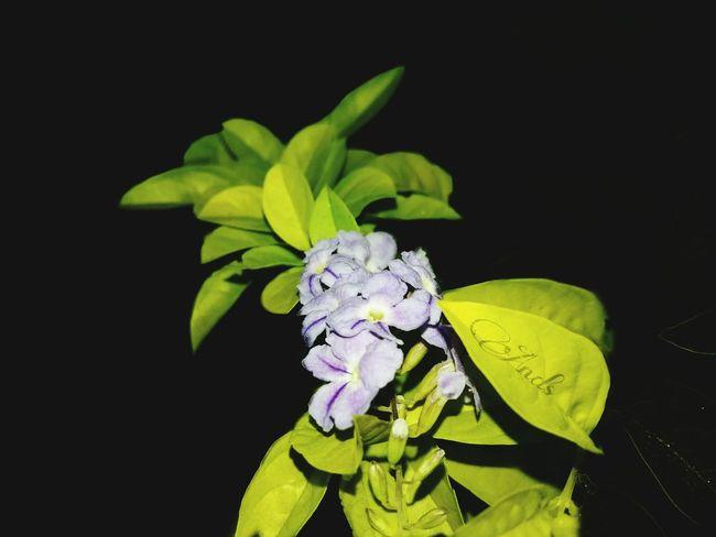 Boa Noite ✌❤ Canada Coast To Coast Natureza 🐦🌳 Secret Garden Vilavelhavitoria Avare SP BRASIL 🇧🇷☀️ The Foodie - 2015 EyeEm Awards Paris, France  Mexico Mi Amor ♥