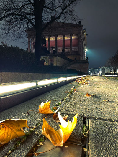 Autumn leaves on street by building at night