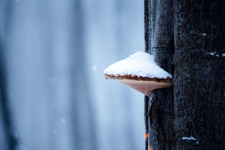 Snow Cold Temperature Winter Wood - Material Day Close-up No People Frozen Nature Tree Trunk Focus On Foreground Trunk Tree White Color Outdoors Plant Beauty In Nature Textured  Metal Snowing Wooden Post