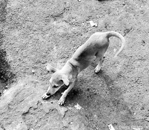Playtime #naturelover #dog #blackandwhite #EyeEmNewHere #tail #playful #puppy #Puppy Love #FirstPhoto #FirstEyeEmPicture #eyemnaturelover #cheer #followme #like #photography #streetphotography Day Outdoors Nature first eyeem photo EyeEmNewHere