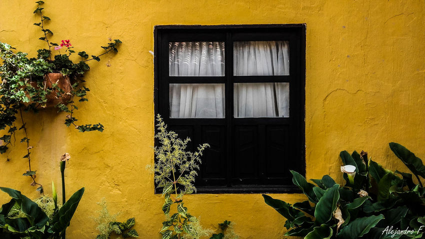 Architecture Building Building Exterior Built Structure Close-up Colonial Architecture Green Color House Old Old Buildings Outdoors Photo Photographer Photography Photooftheday Photos Photoshoot Residential Structure Window Yellow