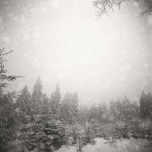6x6 Holga Photography Ice Schneesturm Square Trees Winter Wintertime B&w Blizzard Cold Forest Monochrome Nature No People Outdoors Sky Snow Tree