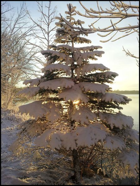 Roy Lake MN this morning!! Taking Photos EyeEm Best Shots - Nature Nature_collection Winter Minnesota Nature Pinetrees Snow ❄