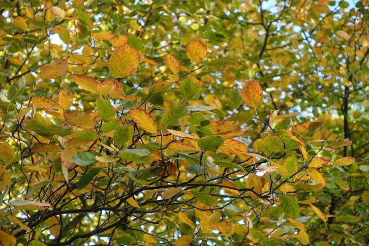 Herbst Herbst Herbstfarben Herbststimmung Tree Leaf Autumn Close-up