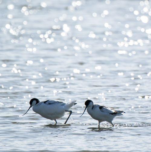 Birds in sea