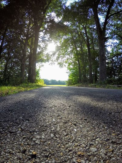 Asphalt Beauty In Nature Day Hope Landscape Light Nature No People Outdoors Park Path Path Forward Road Scenics The Way Forward Tranquil Scene Tranquility Transportation Tree Walking Non-urban Scene Woods Calm Treelined Tree Canopy  Winding Road Idyllic Pathway Remote Country Road