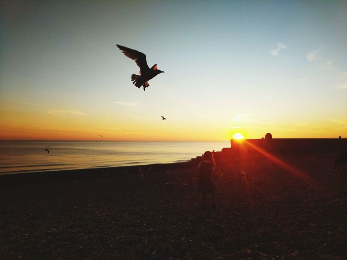 Sunset Flying Beach Sun Sea Silhouette Sunlight Sky Beauty In Nature Mid-air Sand Jumping Horizon Over Water Outdoors Nature Brighton Sunlight Water Vacations Bird Water Scenics Landscape Vacations Bird Golden Hour Brighton Seafront