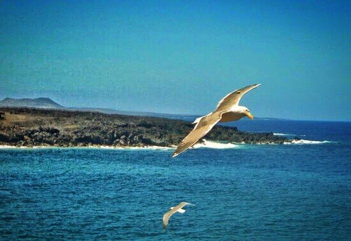 Flyaway Animal Wildlife Bird Animal Themes One Animal Flying Clear Sky Scenics Seagulls