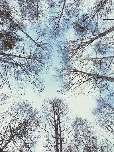 Tree Bare Tree Beauty In Nature Nature Outdoors Sky Blue Branch 자작나무숲 강원도 쓸쓸 겨울 하늘 나무 배경화면 여행 First Eyeem Photo