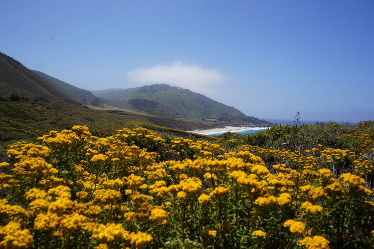 Beauty In Nature Flower Landscape Mountain Outdoors Plant Yellow