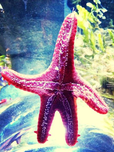 Patrick Star Looking For SpongeBob