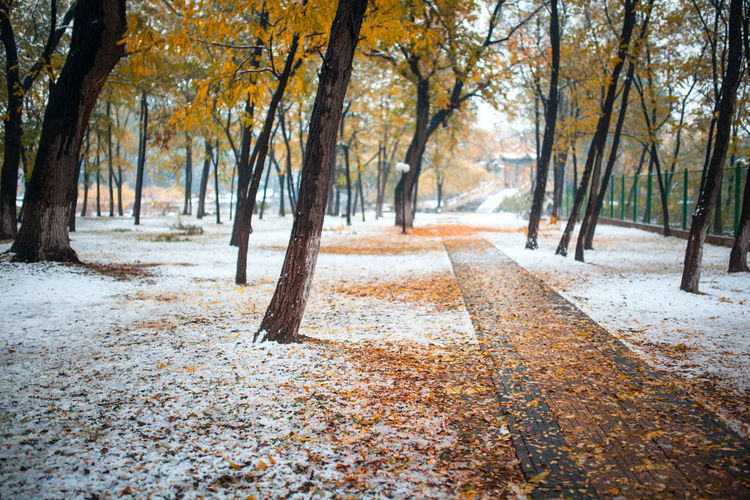 Tree Forest Leaf Autumn Yellow Road Change Cold Temperature Tree Trunk Branch