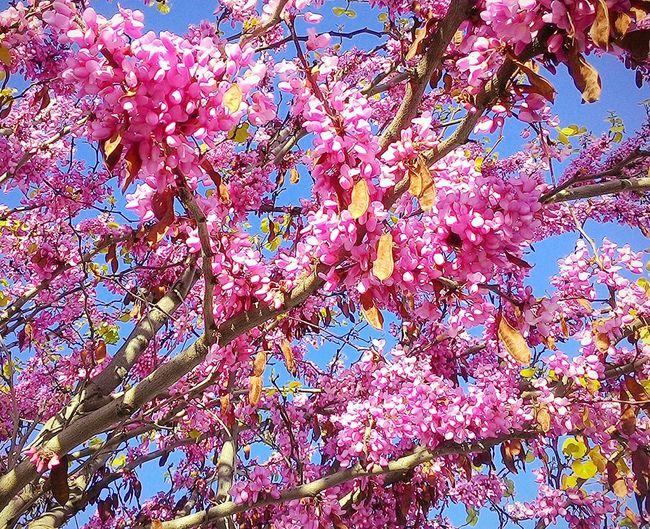 Primavera en