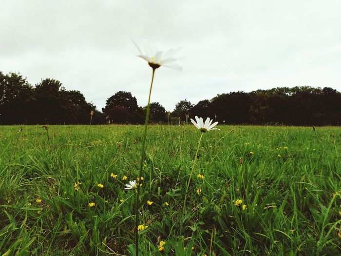 Flowers EyeEm Nature Lover Nature On Your Doorstep Ockendon Essex United Kingdom