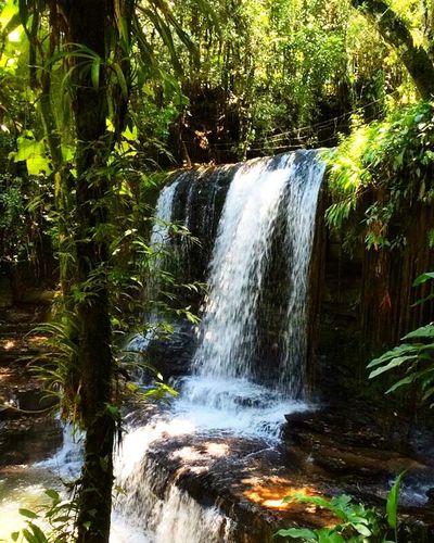 Cachoeira Natureza 🐦🌳 Santa Catarina, Brazil