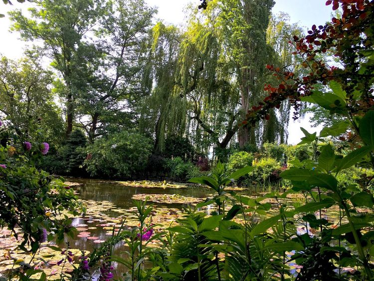 Tree Growth Tranquility Tranquil Scene Tree Trunk Scenics Plant Flower Water Nature Park - Man Made Space Beauty In Nature Branch Green Color Garden Non-urban Scene Park Day Formal Garden WoodLand Waterlilies Monet Garden Fresh On Eyeem