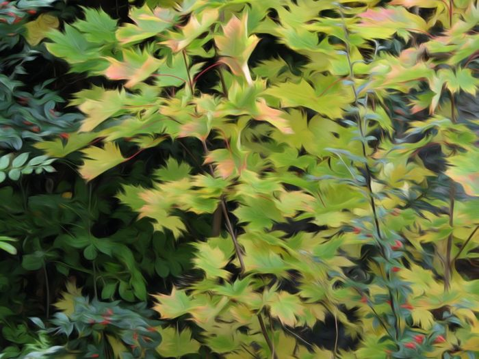 Leaf Growth Plant Full Frame Beauty In Nature Green Color Close-up Nature Abundance Growing Nature On Your Doorstep Changing Colors Change Season  Autumn Nature