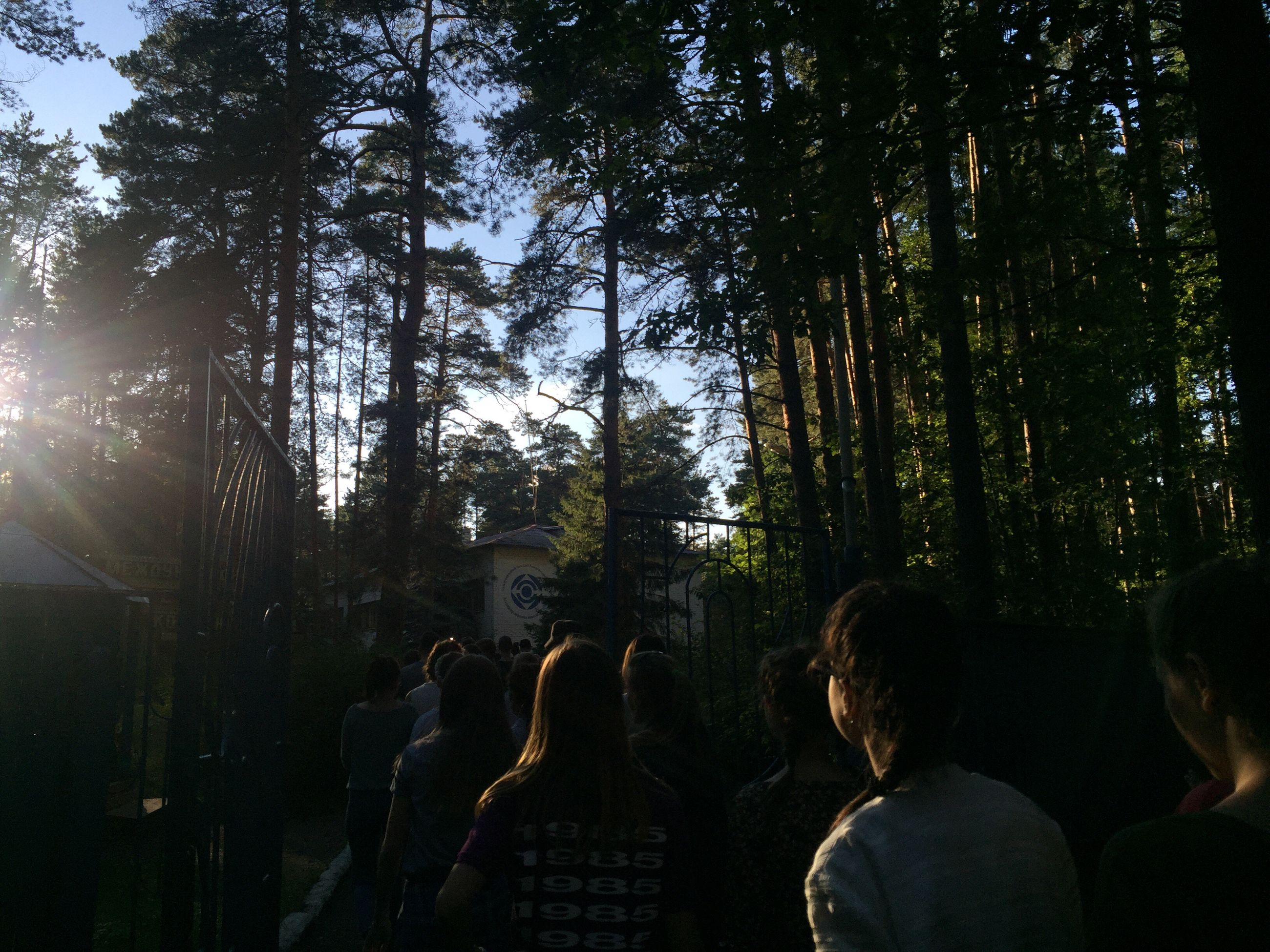 tree, forest, person, growth, woodland, enjoyment, nature, green color, crowd, tranquility, tranquil scene, nightlife