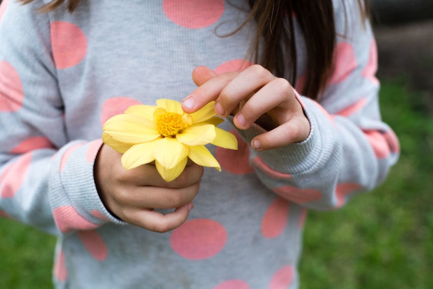 Little girl holding yellow dahlia (cropped) Casual Clothing Child Childhood Children Only Close-up Dahlia Day Flower Flower Head Fragility Front View Gift Girls Hands Cupped Holding Human Body Part Human Hand Midsection Nature One Girl Only One Person Outdoors Petal Real People Yellow