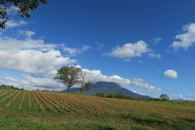 autumn niseko hokkaido japan 2018 In One Photograph It's About The Journey Moments Of Happiness Capture Tomorrow Architecture Tree Grass Mountain Hokkaido Cloud And Sky Niseko Yotei Autumn Mood EyeEmNewHere Yotei Mt., Hokkaido Yotei Mt. Holiday Moments A New Perspective On Life Sky Cloud - Sky Environment Landscape Land Field Plant Scenics - Nature Tranquil Scene Beauty In Nature Tranquility Rural Scene Agriculture Nature Day Growth No People Non-urban Scene Outdoors Plantation