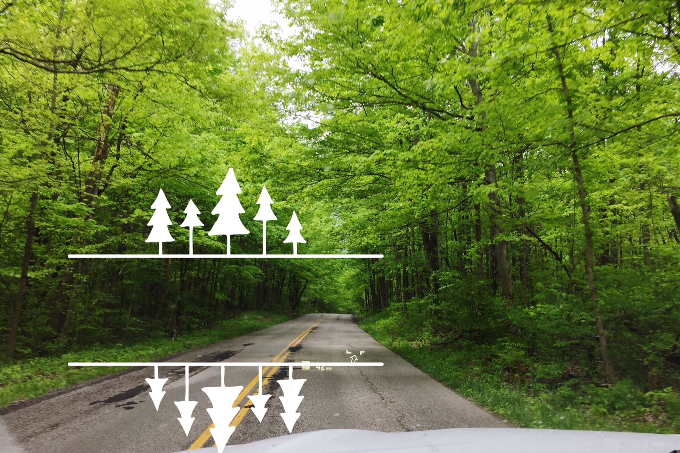 tree, communication, text, western script, day, arrow symbol, transportation, road, road sign, growth, green color, the way forward, directional sign, sign, park - man made space, sunlight, road marking, nature, outdoors, human representation