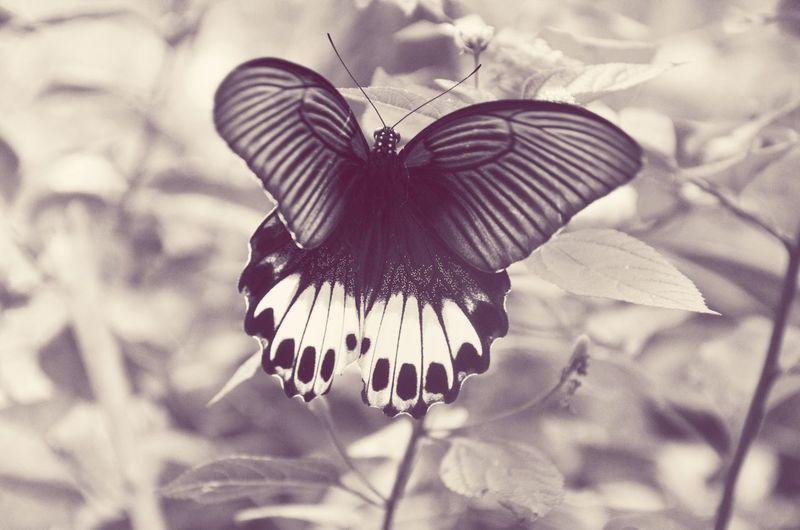 Black butterfly Blackandwhite First Eyeem Photo