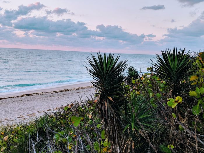 Sunrise Early Morning Palm Beach Island, Florida Beachphotography Serene Outdoors Nature's Beauty Palm Beach Ocean Tequilla Sunrise Water Tree Sea Beach Sky Horizon Over Water Plant Cloud - Sky Summer Exploratorium EyeEmNewHere