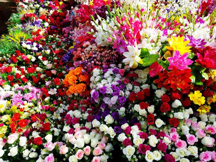 Early Morning Fresh Flowers💐🌻🌸🌼💮 Flower Multi Colored Freshness Nature Fragility Beauty In Nature Petal Full Frame No People Variation Backgrounds Blooming Flower Head Day Close-up Tree