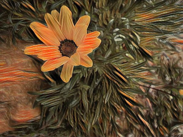 Flower Petal Orange Color Fragility Flower Head Plant Daisy Orange Daisy Flowers Electronic Art Art ArtWork Computer Generated Daisies Daisy Flower Daisy Art Artworks Artwork By Me Artwork Of Nature Work Of Art Drawing
