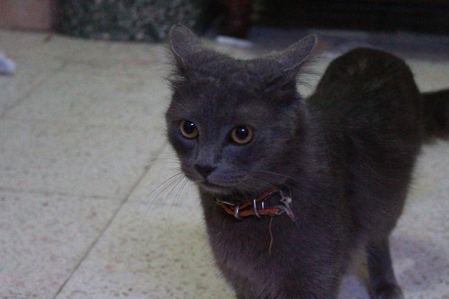 lolito gato argentino. cat faces Animales Argentina Argentina Photography Cat Cat Lovers Cats Cat♡ Felino Gatito Gatitos Gato Gatos