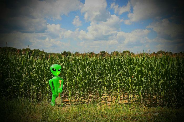Where banjo players come from. Banjo Banjo Player Alien Corn Corn Stalks Little Green Men