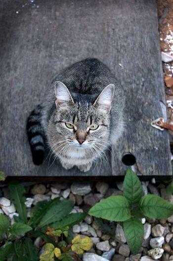 Cat Street Street Foto