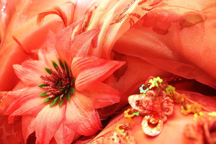 Flower Close-up No People Red Nature Day Indoors  Beauty In Nature Flower Head Looking To The Other Side Unique Perspectives Feeling Inspired Photographer Eye4photography  First Eyeem Photo Eyeemphoto Eyeem Market Maxy My Dress Today's Hot Look Birthday Party Love Girl Colours And Patterns Beautifully Organized Live For The Story BYOPaper! BYOPaper! The Street Photographer - 2017 EyeEm Awards The Photojournalist - 2017 EyeEm Awards The Great Outdoors - 2017 EyeEm Awards Place Of Heart Let's Go. Together. Sommergefühle EyeEm Selects Neon Life Investing In Quality Of Life Postcode Postcards