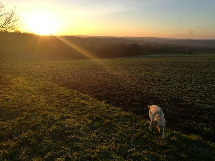 Sunset Sunlight Landscape Beauty In Nature Nature Outdoors Mandy Dog