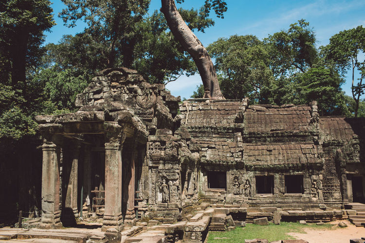 Siem Reap Cambodia Angkor Ancient Tree Old Ruin Architecture History Built Structure The Past Place Of Worship Plant Ancient Civilization Travel Belief Old Nature Archaeology Religion Travel Destinations Tourism Architectural Column No People Ruined Outdoors Deterioration Ancient History