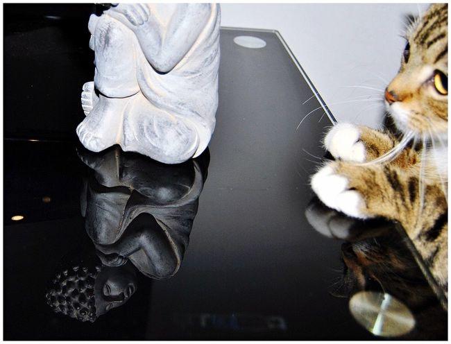 Taking Photos Relaxing EyeEm Best Shots - Reflections Glass Reflection Nikon D3000 Reflection_collection Belgium Bouddha  Cat Watching Cat Curiosity Curious Black Glasses