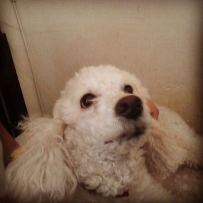 Alguém falou remédio?! Dog Love Tenso Bestfriend