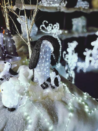 Penguin light Reflection Shiny Indoors  Christmas Ornament Day Christmas Lights Christmas Decorations Christmas Around The World Brescia, Italy