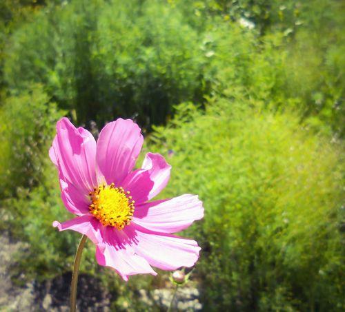 Bonita flor, me encantan las flores Santa Cruz Tlaxcala