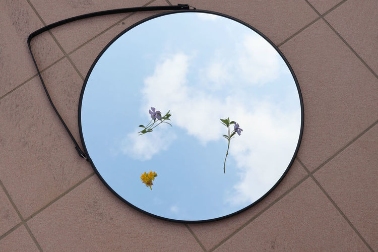 Low angle view of flowering plants against sky in a mirror