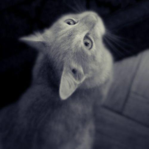Blackandwhite Black And White Cute Cat Bw