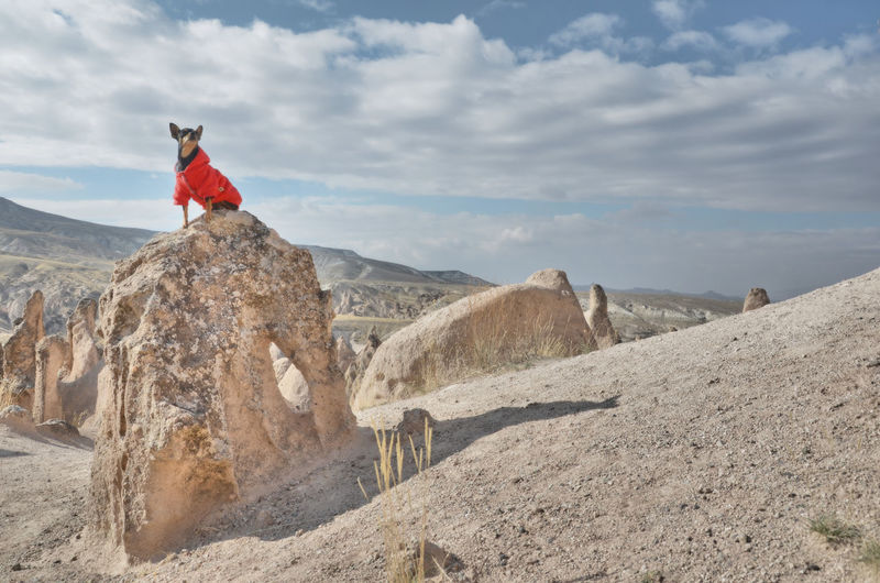 Scenic view of rock formations against sky with a pincher dog