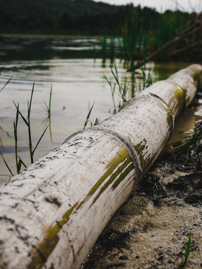 Close-up of pipe on wood