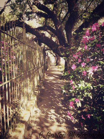 afternoon stroll #outside #trees #spring #flowers #flowers#nature#hangingout#takingphotos#colors#hello World#flora#fauna #SUNNY DAY=happy Day #greenery #walking