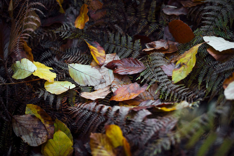 Autumn Autumn Autumn Collection Autumn Colors Autumn Leaves Autumn🍁🍁🍁 Beauty In Nature Close-up Fall Fall Beauty Fall Colors Fall Leaves Fall Collection Fallen Leaf Fallen Leaves Leaf Leaf 🍂 Leafs Leafs Photography Nature Still Life